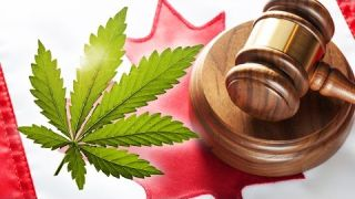 Marijuana Laws in Canada: What Do They Mean?  March 2016