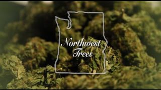 Marijuana Documentary - Northwest Trees (2016)